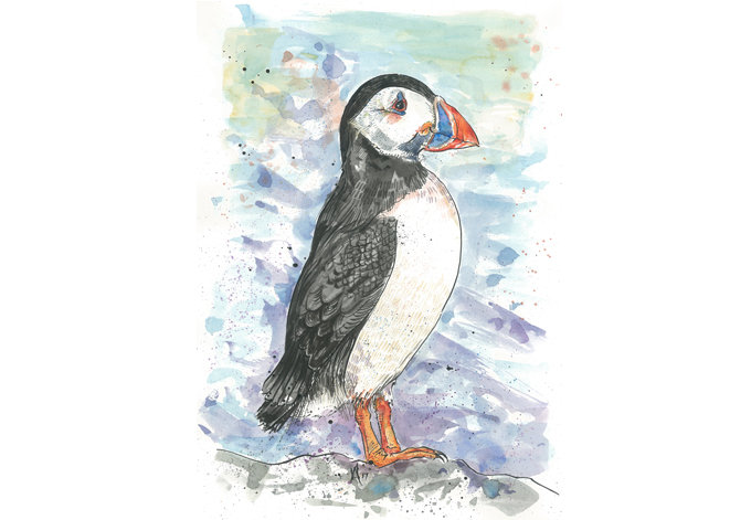'Puffin'Original £150, (A4 print with mount £10)