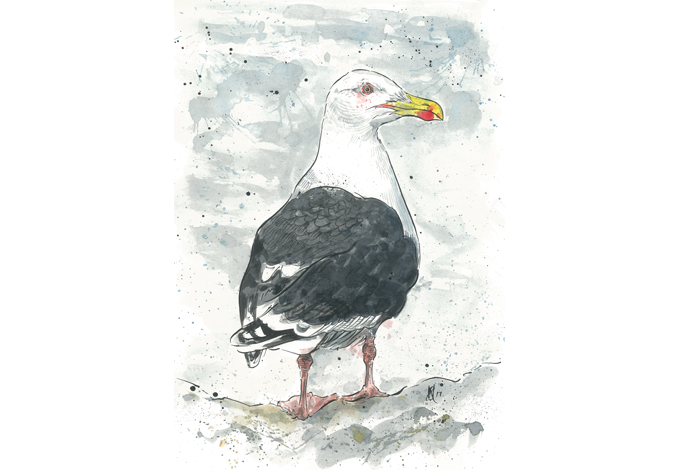 'Great Black-backed Gull' SOLD, (print with mount £10)