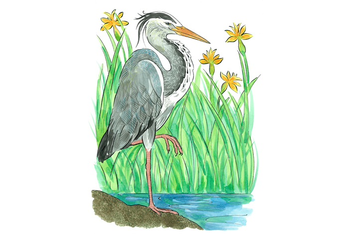 A collection of illustrations inspired by The Westwood & Miller's Pond Local Nature Reserves, Weston Shore and my garden...