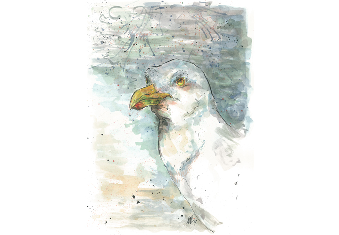 'Herring Gull', Original £150, (A4 print with mount £10)