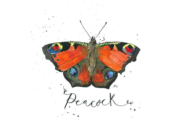 'Peacock'