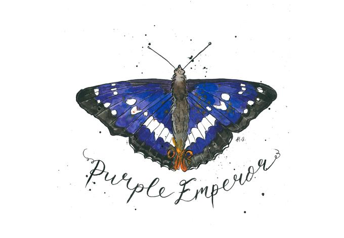 'Purple Emperor'