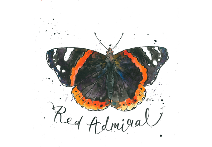 'Red Admiral'